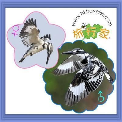 species_2013_12